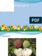 Annonaceae Dan Convolvulaceae