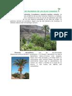 Especies de Palmeras de Las Islas Canarias
