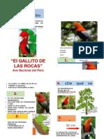 Díptico Del Gallito de Las Rocas
