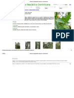 Lauraceae_ Cigua Aguacatillo, Cigua Prieta - Ocotea Floribunda