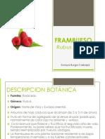 FRAMBUESO.pdf