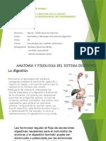 Anatomia Sistema Digestivo David 2