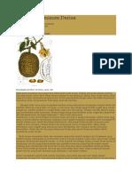 Panduan Menanam Durian