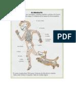 Enciclopedia de El Cuerpo Humano