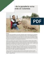 El Negocio de La Ganadería Ovina Está Creciendo en Colombia