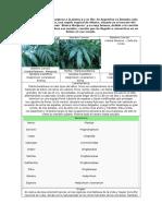 Plantas Zona 6 y 7