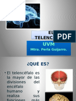 11 Telencéfalo
