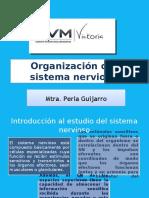 7 ORGANIZACIÓN DEL SISTEMA NERVIOSO.pptx