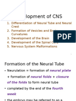 4.Development of CNS