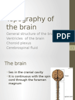 2.Topography of the Brain
