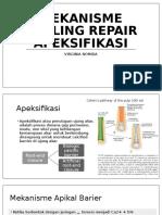 Skenario 11 Mekanisme Healing Repair Apeksifikasi