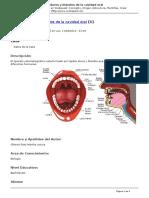 Webquest Concepto Origen Estructura Plantillas Crear Webquest - Tejidos Duros y Blandos de La Cavidad Oral - 2012-06-11
