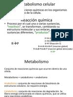 Metabolismo y Respiracioìn Celular