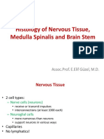 Histology of Nervous Tissue and Medulla Spinalis