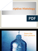 Descreptive Histology 1