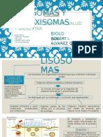 Lisosomas y Peroxisomas