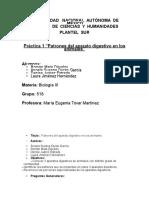 Practica 1Patrones de los aparatos digestivos de los animales