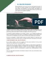 El Delfín Rosado