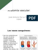 Anatomía Vascular