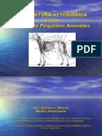 56773097-acupuntura-veterinaria