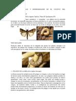 Principales Plagas y Enfermedades en El Cultivo Del Algodonero