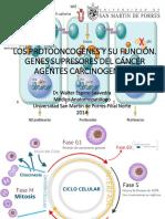 Agentes Carcinogenicos y Protooncogenes