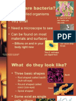 BACTERIA.ppt