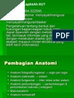 Kuliah Anatomi SP_galih.ppt
