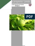 Limon Final