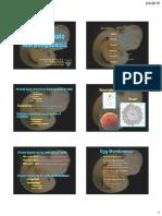 CVA 2016 Lec2 - Embryology