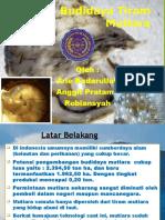 Ppt Budidaya Tiram Mutiara 08