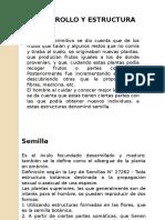desarrollo y estructura de la semilla