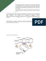 Los Receptores Que Son Acoplados a Proteínas G