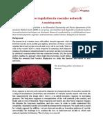 Internship Blood Flow Regulation
