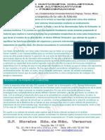 TALLER KINESIOLOGIA SALES DE SHUSSLER.pdf