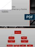 Comparacion Australopithecus y Homo Habilis