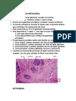 Prostata (1)