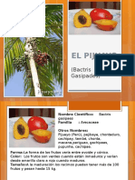 El Pijuayo