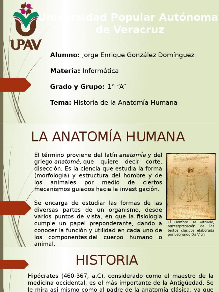 Famoso Importante En La Anatomía Foto - Anatomía de Las Imágenesdel ...