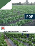 Charla De pesticidas