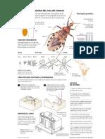 El Chipo Mal de Chagas
