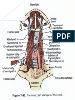 Anttrirootneck Dissector