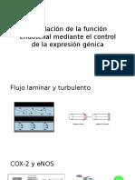 Regulación de La Función Endotelial Mediante El Control-paul