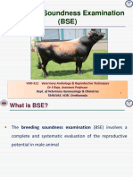 Breeding Soundness Examination for Bulls  - Dr S Raja