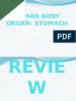 Science IV Stomach