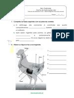A.2.4 Sistema Digestivo de Outros Animais Ficha de Trabalho 1
