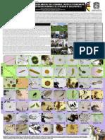 Fitoplancton y Zooplancton Humedales Bogotá D.C. 2015. Experiencia Localidad de Suba Humedal Córdoba y Conejera (microalgas, protozoos, rotiferos, anelidos, platelmintos, entre otros)