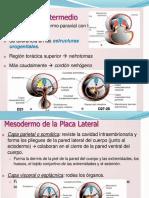 Presentación1.pptx MAURO.pptx