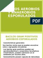 Bacilo Anthracis y Subtilis (2)