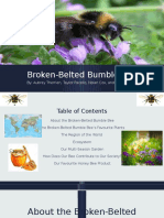 Broken-Belted Bumble Bee